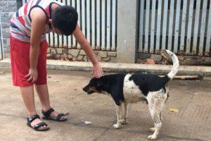 Bệnh giun đũa chó có nguy hiểm không