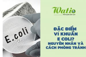 vi-khuan-e-coli